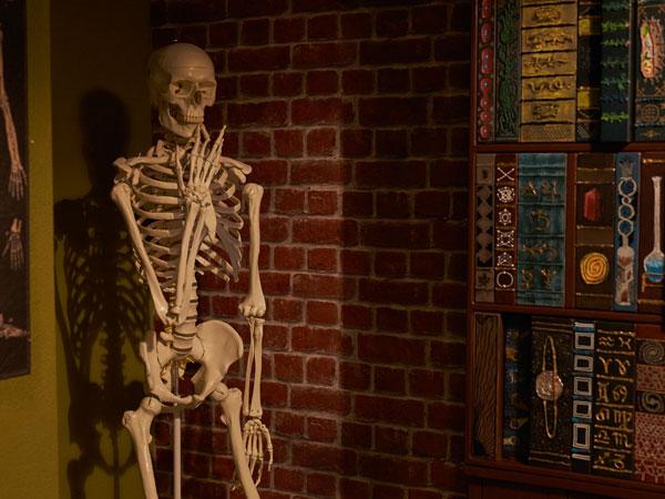 Skelett in einem Labor